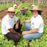 A desoneração do pagamento do salário-educação do produtor rural
