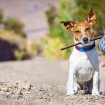 Guarda alternada - animais domésticos: três perplexidades na defesa de seus interesses