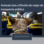 Animais tem o Direito de viajar de transporte público