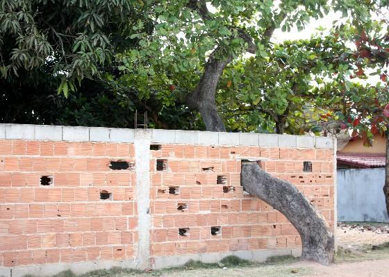 O fruto da discrdia A rvore do vizinho est invadindo meu terreno E agora