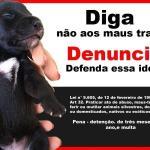 FLAGRANTE DELITO Animais vítimas de maus-tratos podem ser resgatados sem mandado judicial