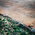 São Paulo não pode permitir retrocessos em sua legislação ambiental