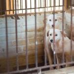 Liminar obriga Capital a recolher e abrigar cães ferozes abandonados