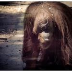 A partir de agora ONGs podem demandar em processos penais a favor dos animais