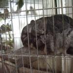Nova lei fixa multa de até R$ 3 mil para quem maltratar animais em MG
