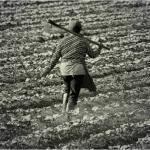 Tribunal reforma sentença que negava auxílio-doença a agricultora por considerar o trabalho feminino no campo