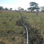PF prende agricultor e solta dono de plantação de maconha