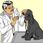 Médico veterinário tem reconhecido tempo de serviço como atividade especial