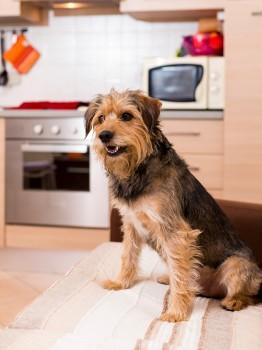 Cachorros em apartamento saiba tudo sobre seus direitos e deveres